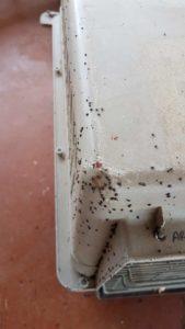 Ticks built up on pet carrier