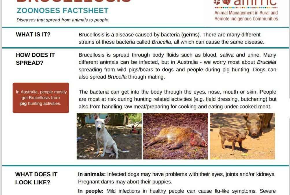 Brucellosis – Zoonoses Fact Sheet