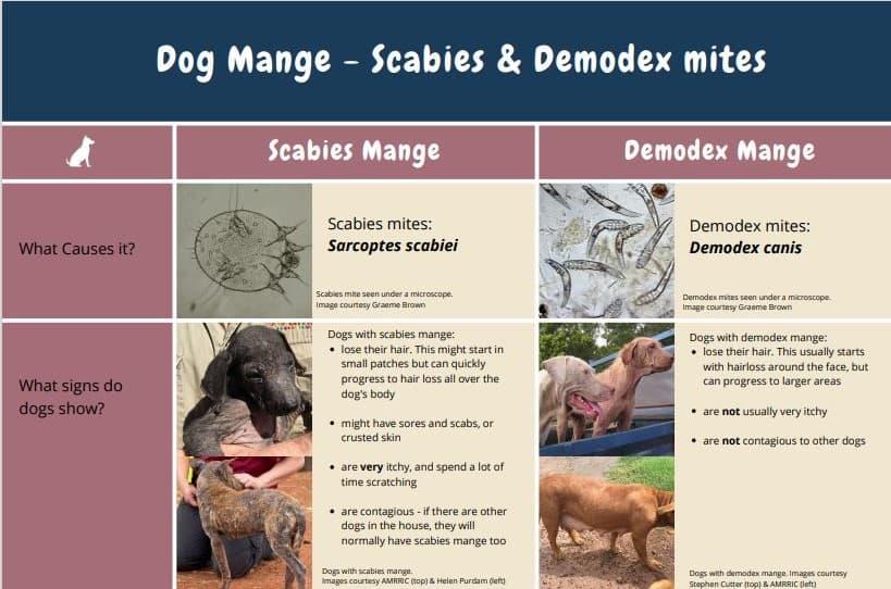 Dog Mange Comparison Poster